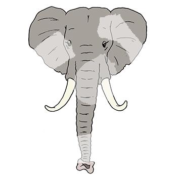 Elefant-2118.png