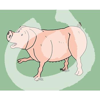 Fabel-Schwein4-1885.png