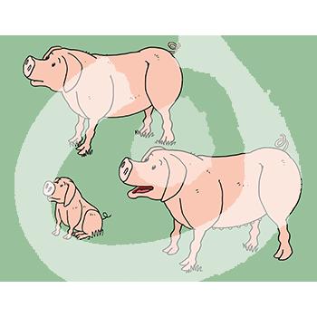 Fabel-Schweine2-1872.png
