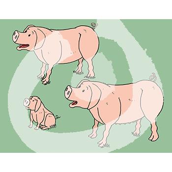 Fabel-Schweine3-1883.png