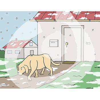 Hund-draußen-1453.png