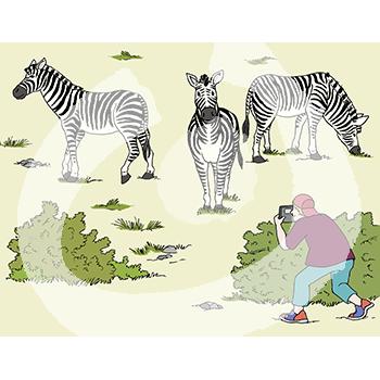 Zebras-2121.png